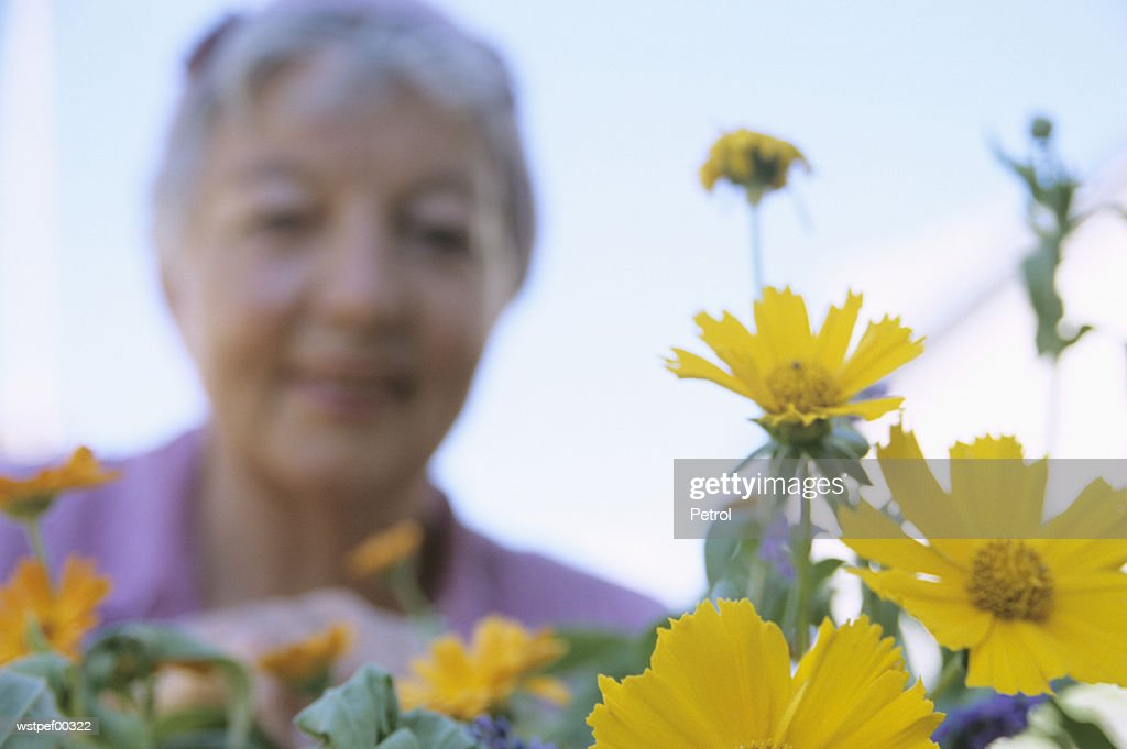 Senior woman, focus on flower : Stock Photo