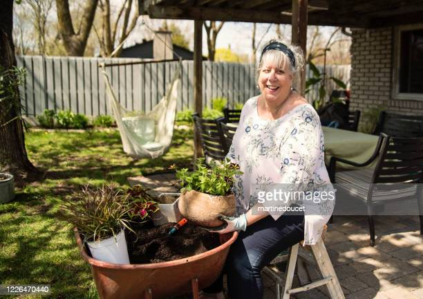 "senior woman gardening in suburban backyard. - ""martine doucet"" or martinedoucet foto e immagini stock"