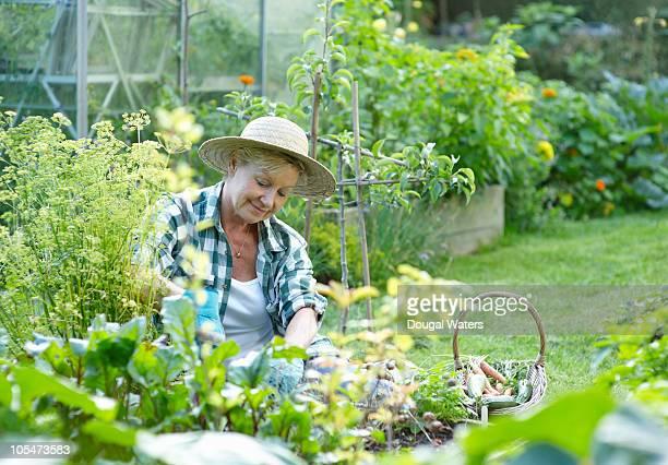 Senior woman gardening.