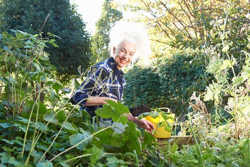 senior woman gardening - gettyimageskorea