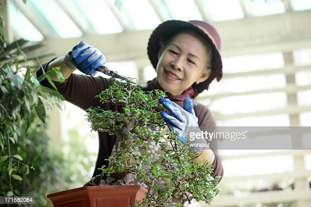 senior woman gardening - bonsai tree stock pictures, royalty-free photos & images