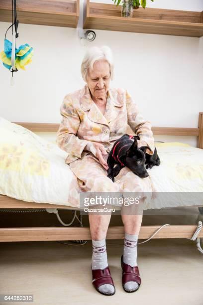 Ältere Frau, die Pet-Therapie im Pflegeheim