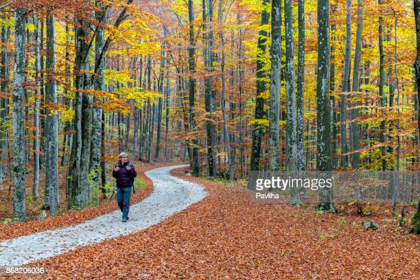 senior woman hiking in autumnal forest, julian alps, slovenia, europe - slovenia stock pictures, royalty-free photos & images