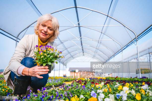 senior woman holding flowering plant in greenhouse - green fingers stock pictures, royalty-free photos & images