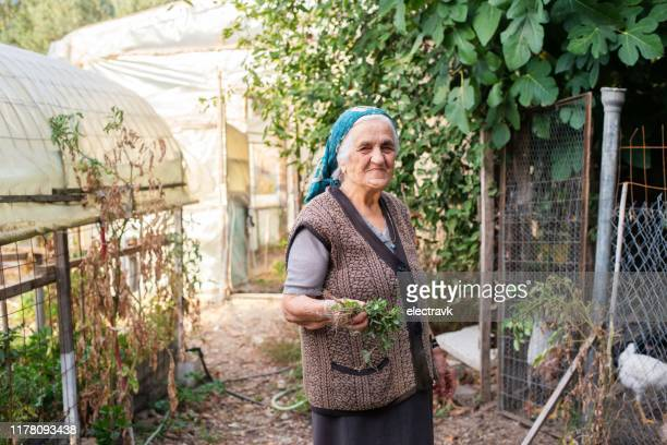 senior woman in her garden - agricultural occupation stock pictures, royalty-free photos & images