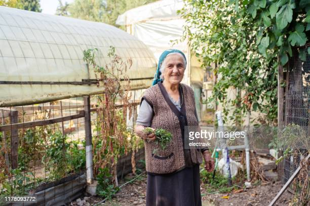 senior woman in her garden - greek culture stock pictures, royalty-free photos & images
