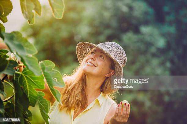 Senior Woman in her Vegetable Garden Checking the Fig Tree