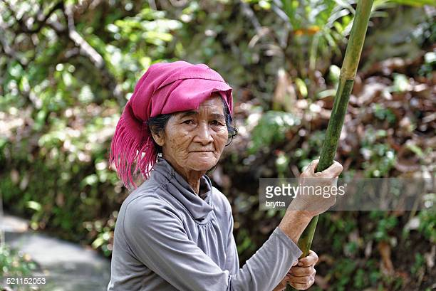 senior woman is  harvesting cocoa - cacao tree stock photos and pictures