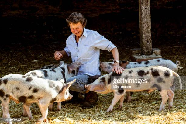 Senior woman kneeling in barn with Gloucester Old Spot pigs.