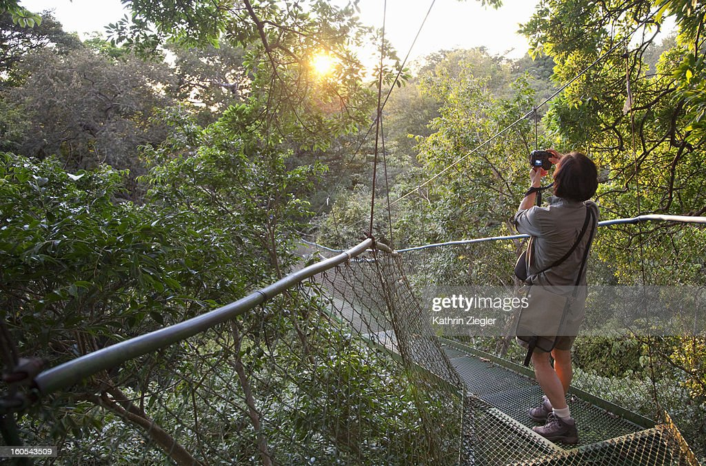 senior woman on a hanging bridge in the rainforest : Stock Photo
