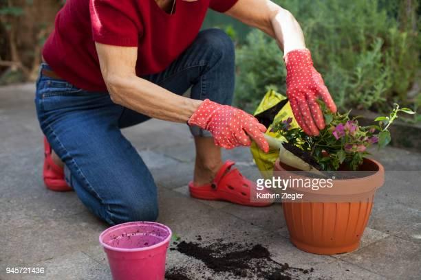 Senior woman on the terrace, potting bougainvillea