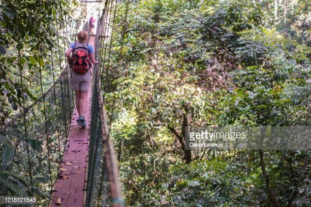 hogere vrouw op de hoogste canopy gang van de boom in borneo - kruin stockfoto's en -beelden