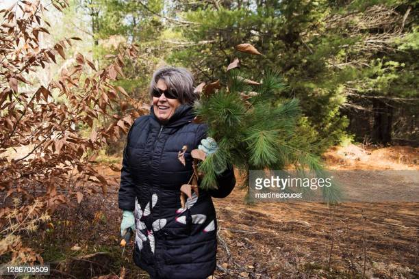 """senior woman picking up fir branch in forest for diy project. - """"martine doucet"""" or martinedoucet stock pictures, royalty-free photos & images"""