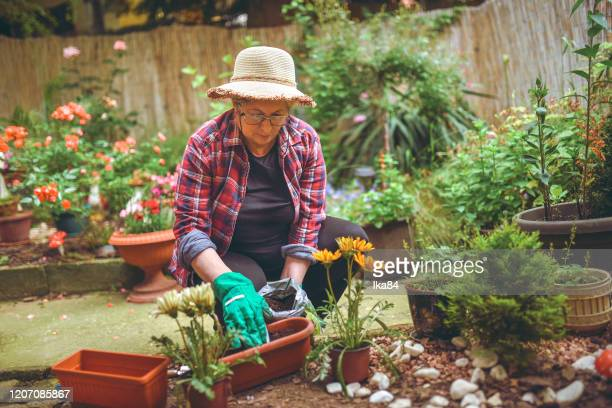 senior woman planting flowers in a pot - sun hat stock pictures, royalty-free photos & images