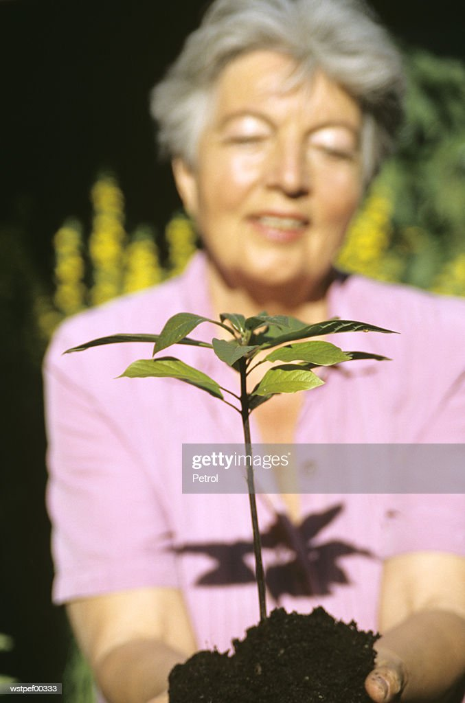 Senior woman planting, focus on foreground : Foto de stock
