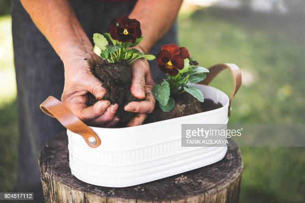 Senior woman potting flowers on a sunny day