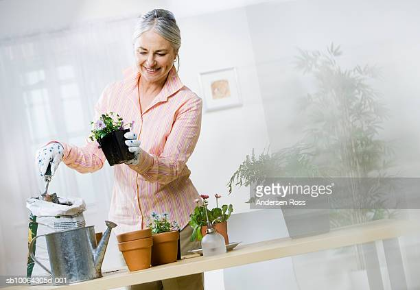 Senior woman potting house plants in home