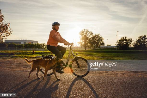 senior woman riding bicycle and walking malinois dog - belgian malinois stock photos and pictures