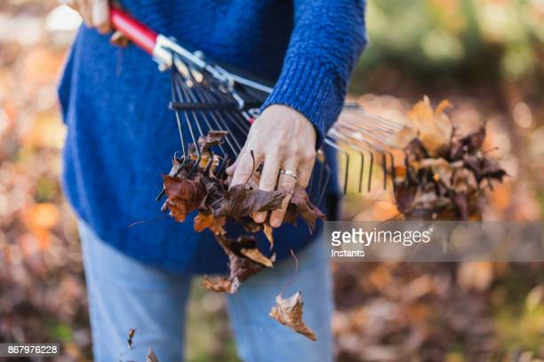 senior woman taking care of the leaves on her property. - rake stock pictures, royalty-free photos & images