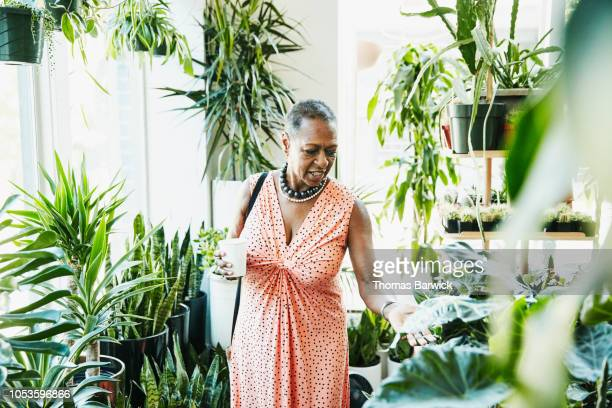 senior woman touching plant leaf while shopping in plant store - glattrasiert frau stock-fotos und bilder