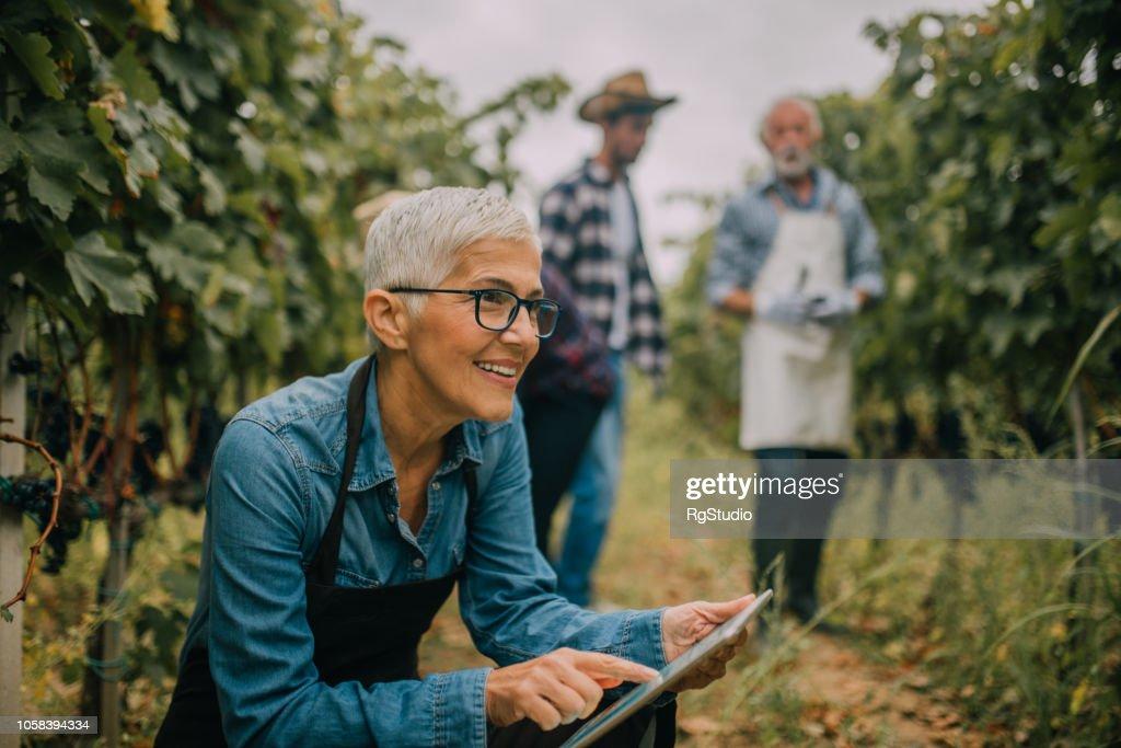 Mulher sênior usando tablet digital : Foto de stock