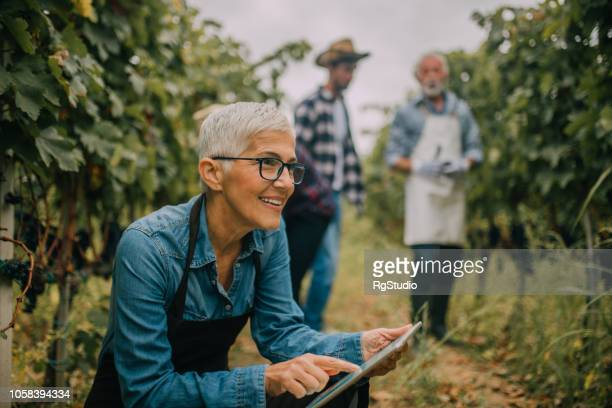 senior woman using digital tablet - agriculture stock pictures, royalty-free photos & images