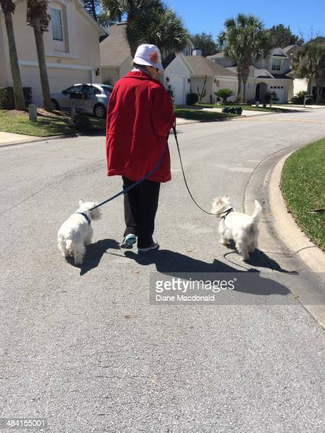 Senior woman walking a pair of purebred West Highland Terriers or Westies as they are known