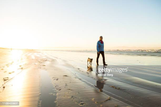 senior woman walking her dog on the beach at dawn - morning stock pictures, royalty-free photos & images