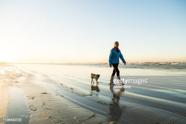 senior woman walking her dog on the beach at dawn - estilo de vida ativo imagens e fotografias de stock