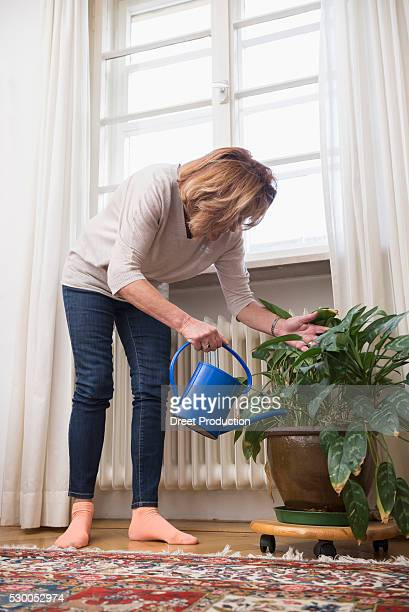 Senior woman watering houseplant near window, Munich, Bavaria, Germany
