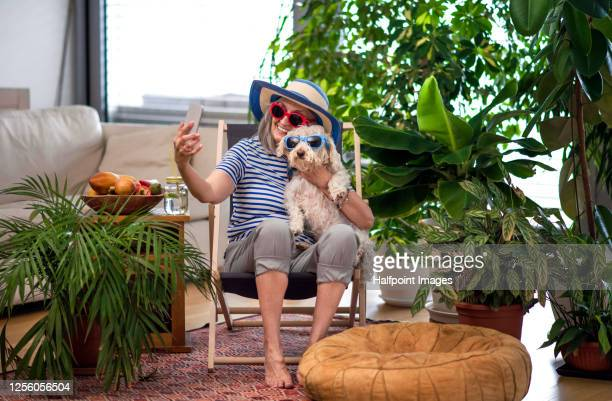 senior woman with dog relaxing and taking selfie indoors at home, lockdown concept. - disruptaging stock-fotos und bilder