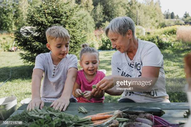 senior woman with grandson and granddaughter enjoying harvested vegetables in the garden - harvest table stock pictures, royalty-free photos & images