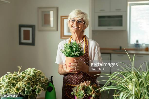 senior woman with green plants and flowers looking at camera - potting stock pictures, royalty-free photos & images