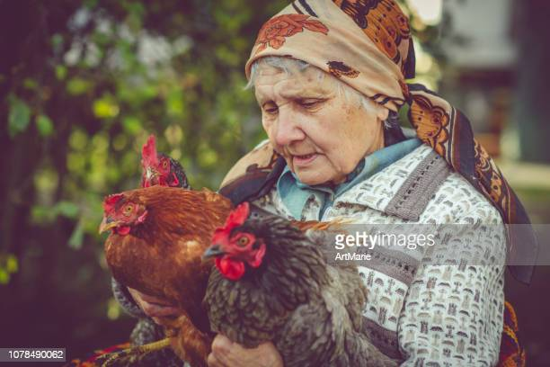 senior woman with her chicken - babushka stock pictures, royalty-free photos & images