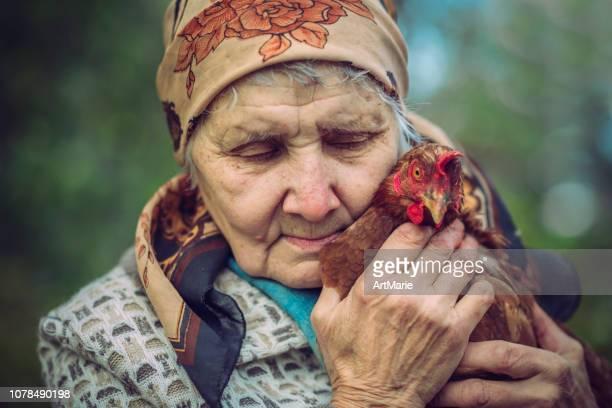 senior woman with her chicken - só uma mulher idosa imagens e fotografias de stock