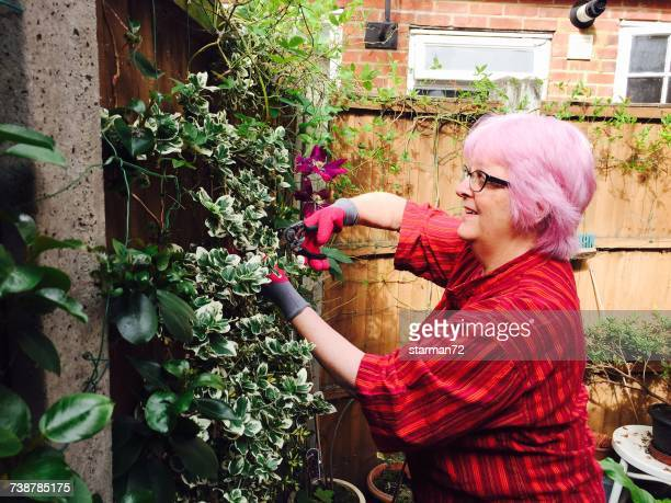 senior woman with pink hair gardening - pink hair stock pictures, royalty-free photos & images