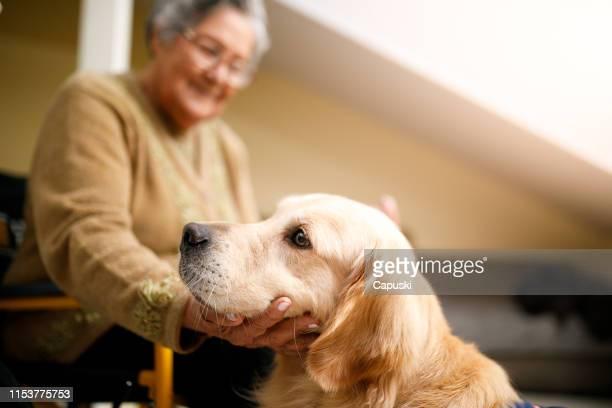 seniorin mit therapiehund zu hause - servicehund stock-fotos und bilder