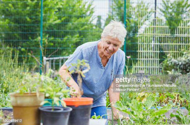 senior woman working in community garden - compassionate eye foundation stock pictures, royalty-free photos & images