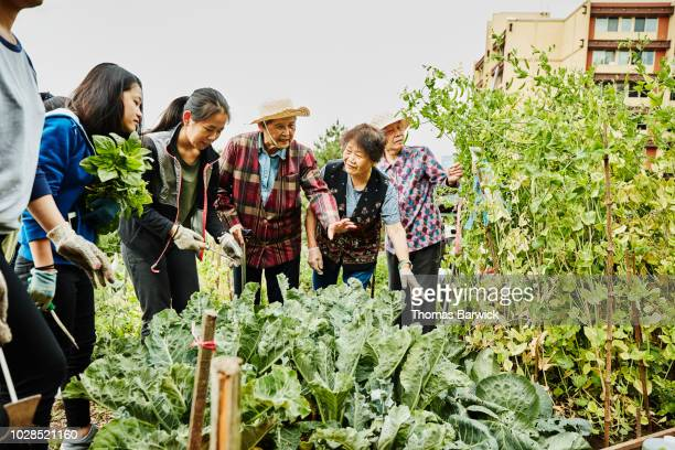 Senior women explaining work to be done to young volunteers working in community garden