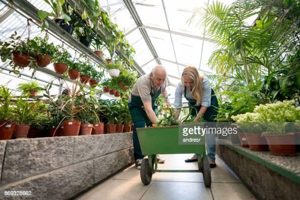 Ältere Arbeitnehmer in einem Garten-Center setzen Pflanzen in einem Wagenrad