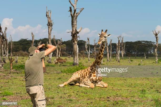 senioren, erfassung von wildtieren, mann fotografieren giraffen in afrika - großwild stock-fotos und bilder