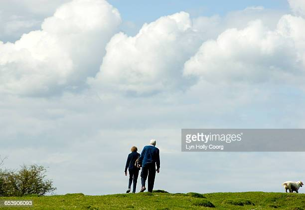 seniors walking in countryside with dog - lyn holly coorg stock pictures, royalty-free photos & images