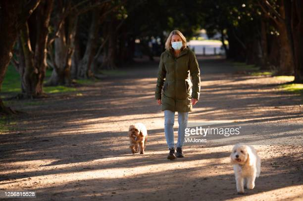 seniors wearing masks walking dogs - melbourne australia stock pictures, royalty-free photos & images