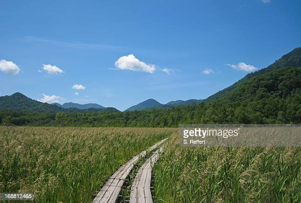 senjo field - nikko city stock pictures, royalty-free photos & images