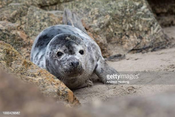 Sennen Seal