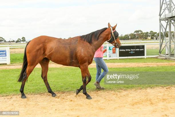 Senorita On Safari after winning the Classicbet 0 58 Handicap at Bairnsdale Racecourse on April 01 2017 in Bairnsdale Australia