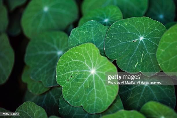 sensory colors - nasturtium stock pictures, royalty-free photos & images