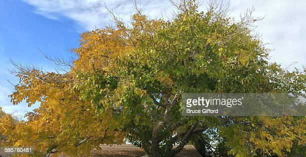 sensory colors - mulberry tree stock pictures, royalty-free photos & images