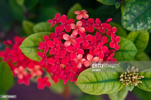 sensory colors - quintana roo stock pictures, royalty-free photos & images