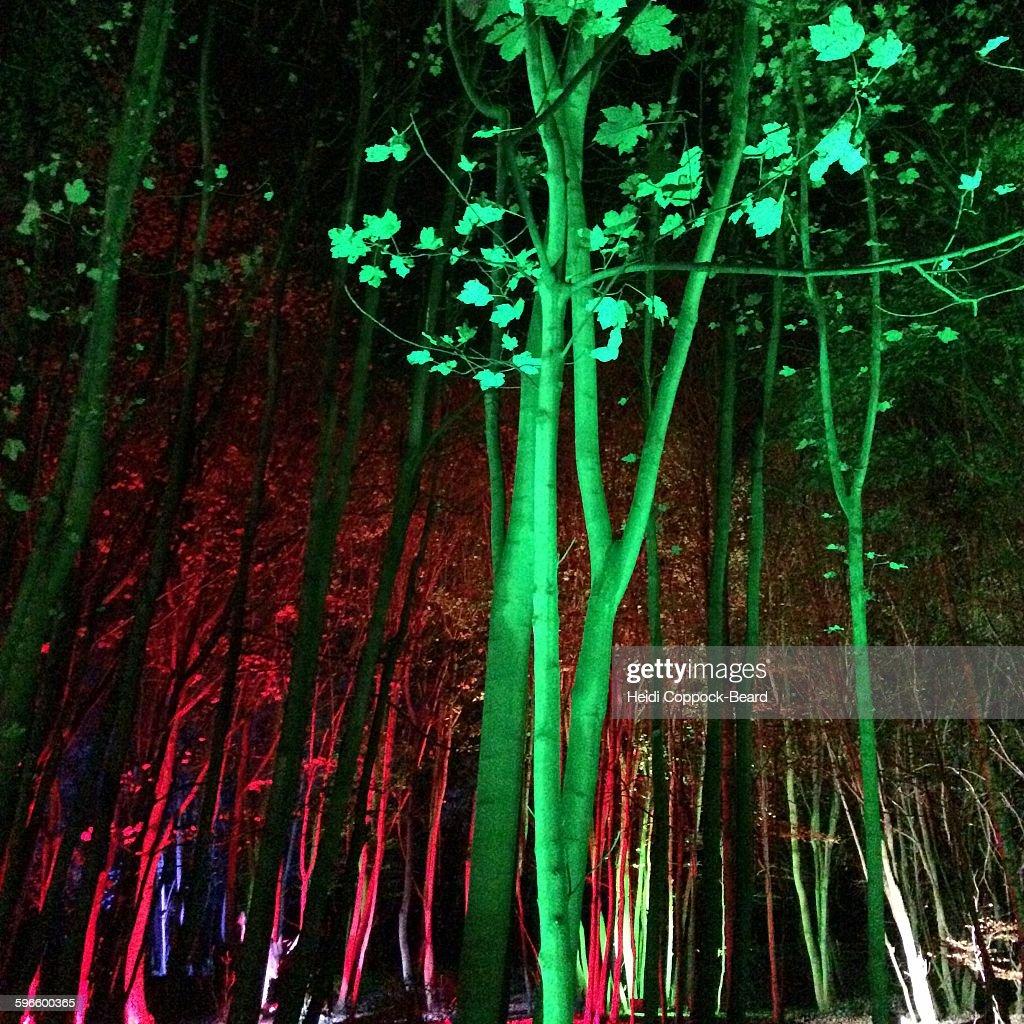 Sensory Colors : Stock Photo